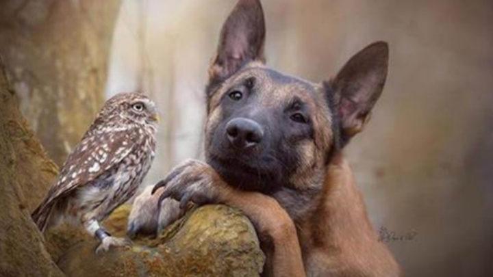 30+ фотографий пса и его подруги совы,которые просто светятся теплом