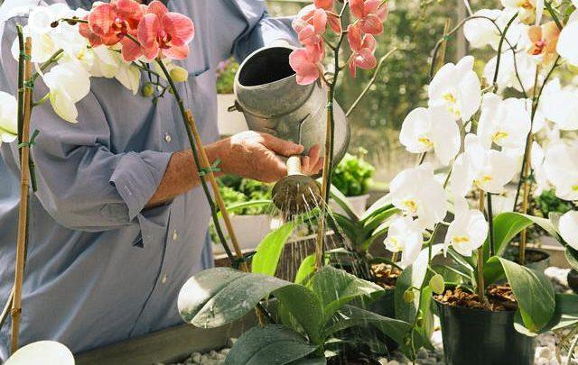 9 правил чтобы орхидея цвела круглый год