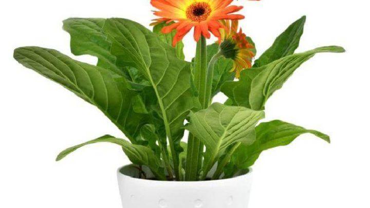 9 растений, которые хорошо иметь в спальне
