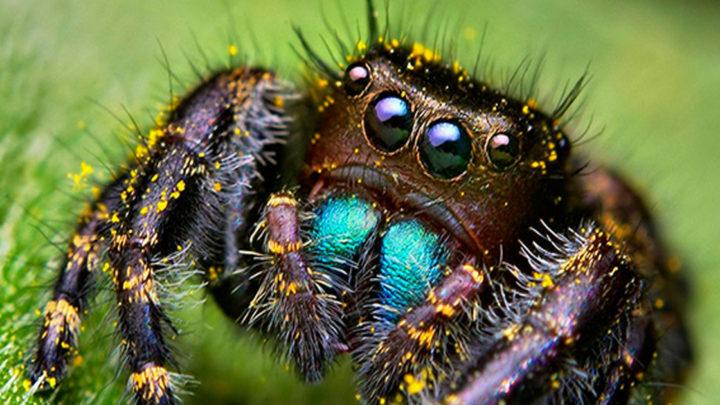 Откуда у нас страх пауков?
