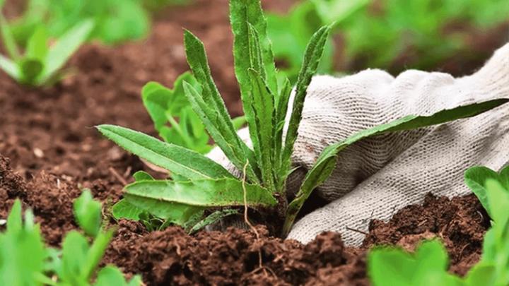 Работающий способ, как избавиться от сорняков и травы навсегда