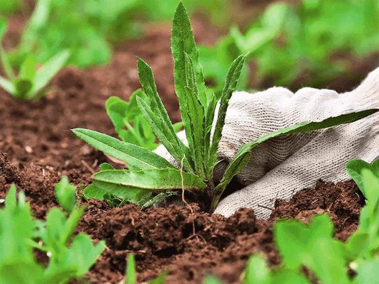 Прекрасный способ, как избавиться от сорняков и травы