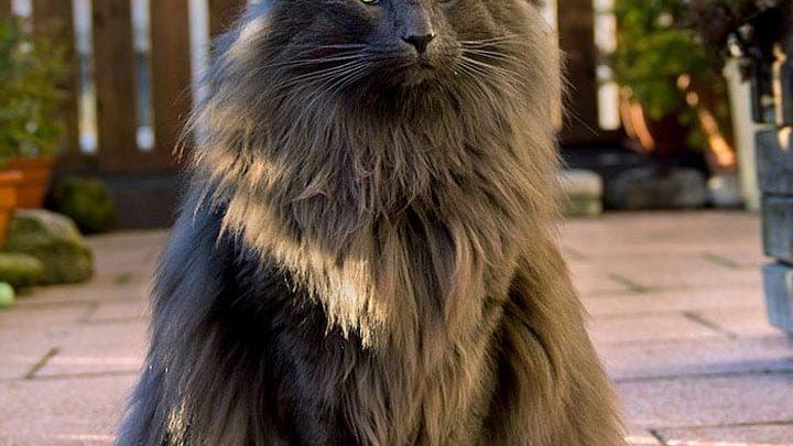 20 самых красивых котов в мире, от которых вы будете в восторге