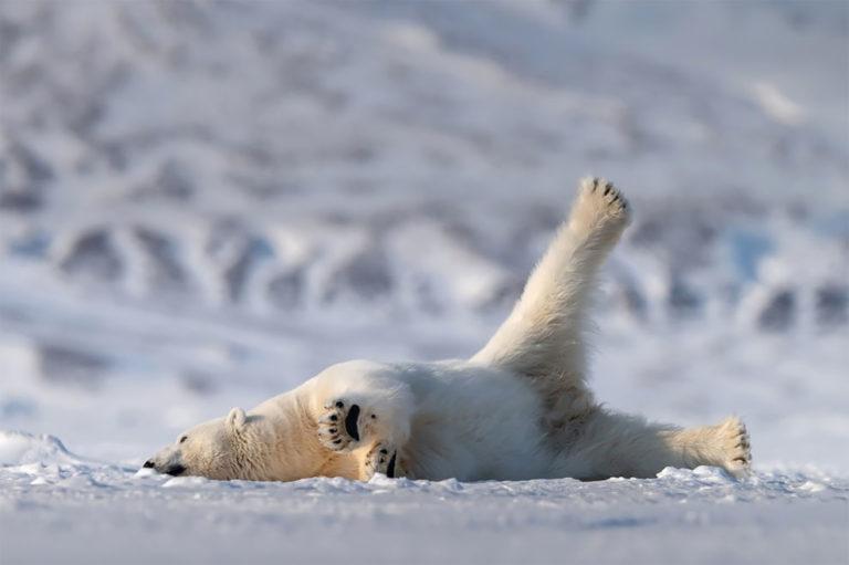 25 забавных животных, которые поднимут вам настроение