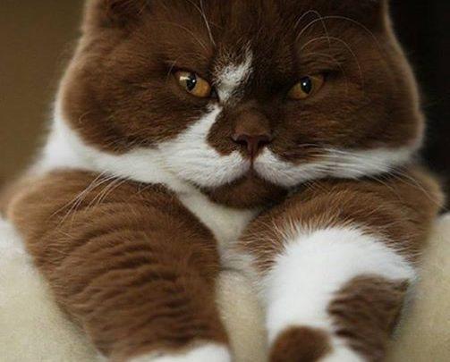 Подборка самых очаровательных котиков.