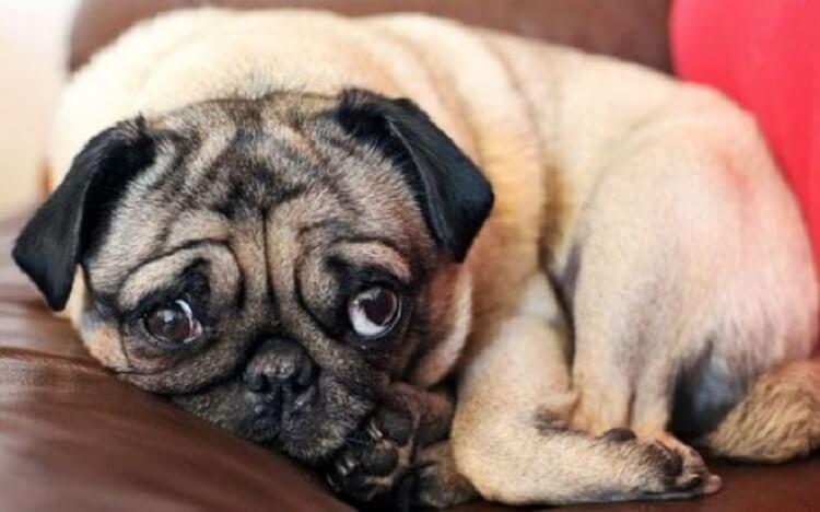35 животных, которые очень сильно на кого-то обиделись