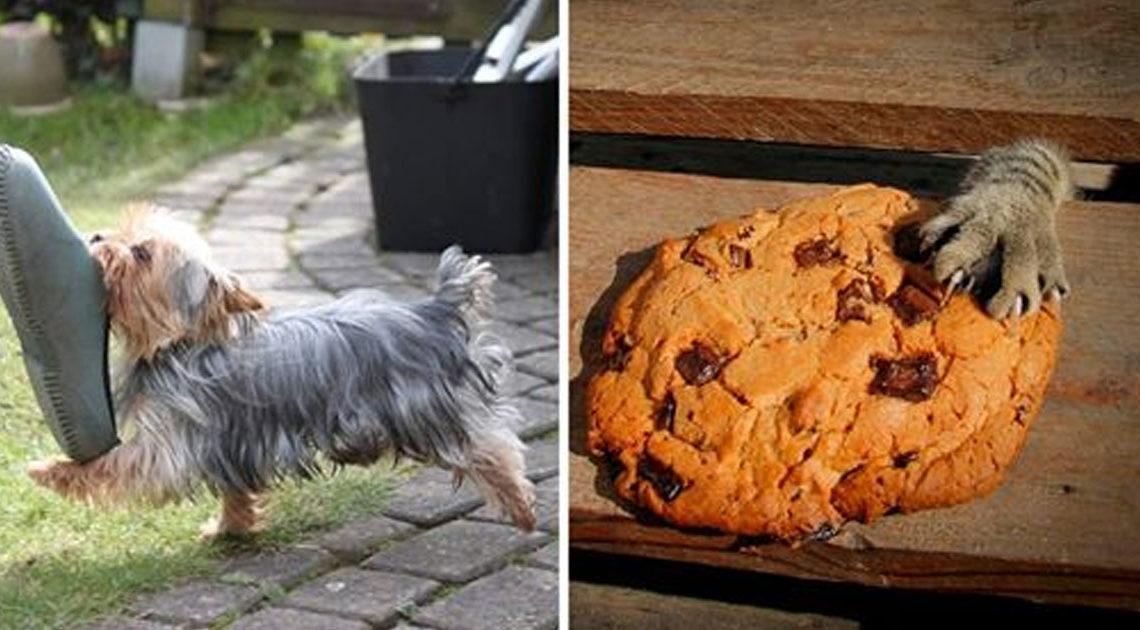 23 смешных фото животных, которых поймали с поличным