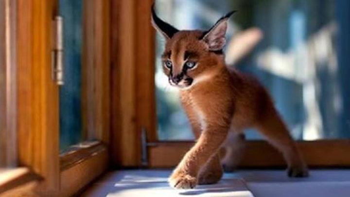 20 самых красивых котов в мире