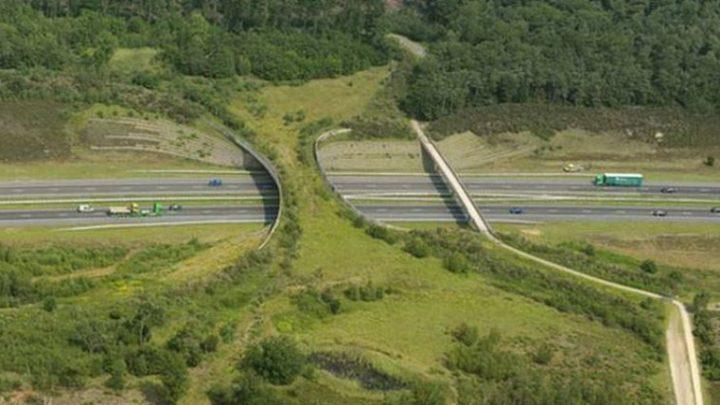 20 потрясающих мостов, которые спасают тысячи жизней ежегодно (20 фото)