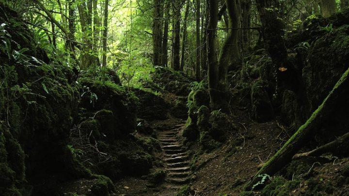 13 жутких деревьев, которые заставят вас бежать из последних сил