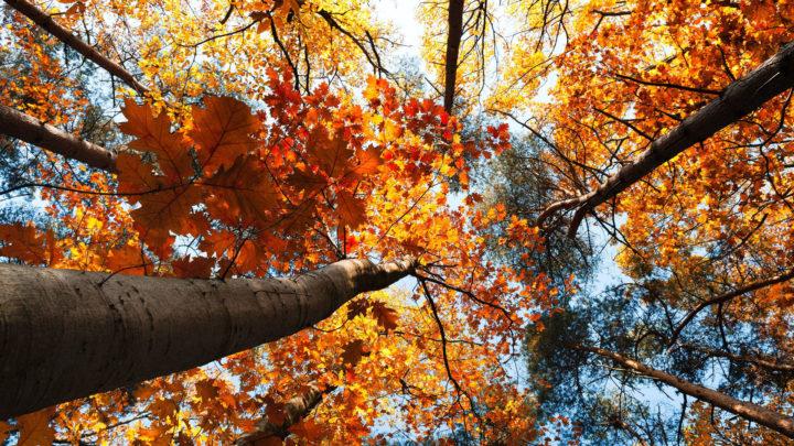 25 потрясающих фото о том, как осень умеет творить настоящие чудеса